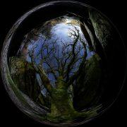 Huelgoat : Hêtre fantomatique