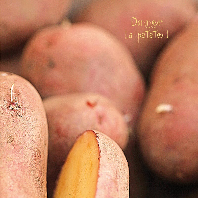 photo de Katy Sannier - Donner la patate