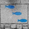 """Photo """"Trois poissons bleus"""""""