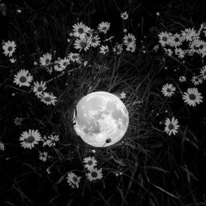 """Photo à encadrer Lune sous un nouveau jour """"La Lune dans un champ de pâquerettes"""""""