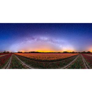 La Torche : champ de tulipes sous la Voie lactée